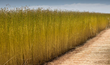 Pulses & Specialty Crops