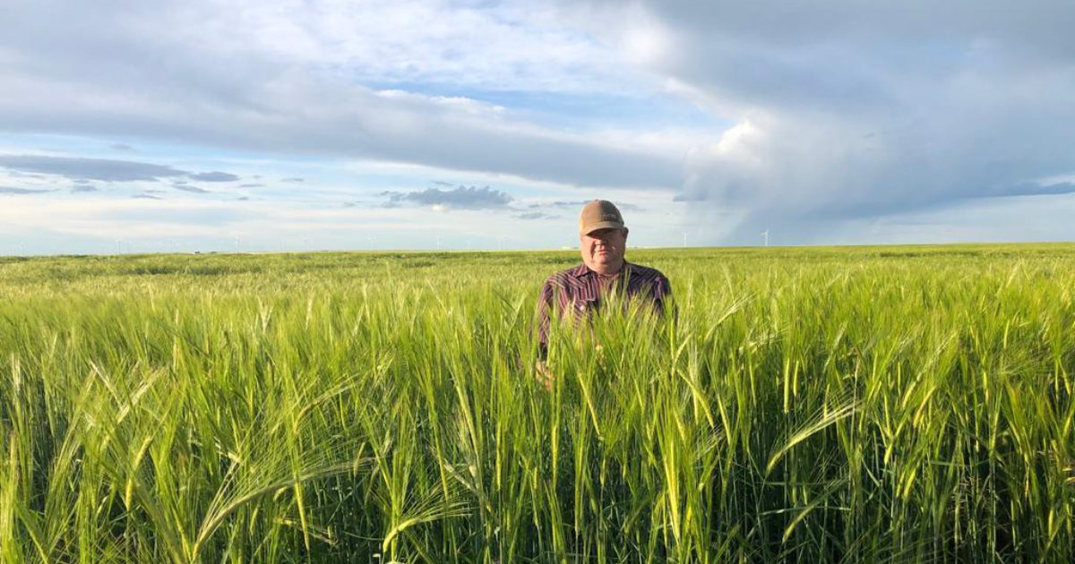 Top Three Forage Barley Choices for 2021