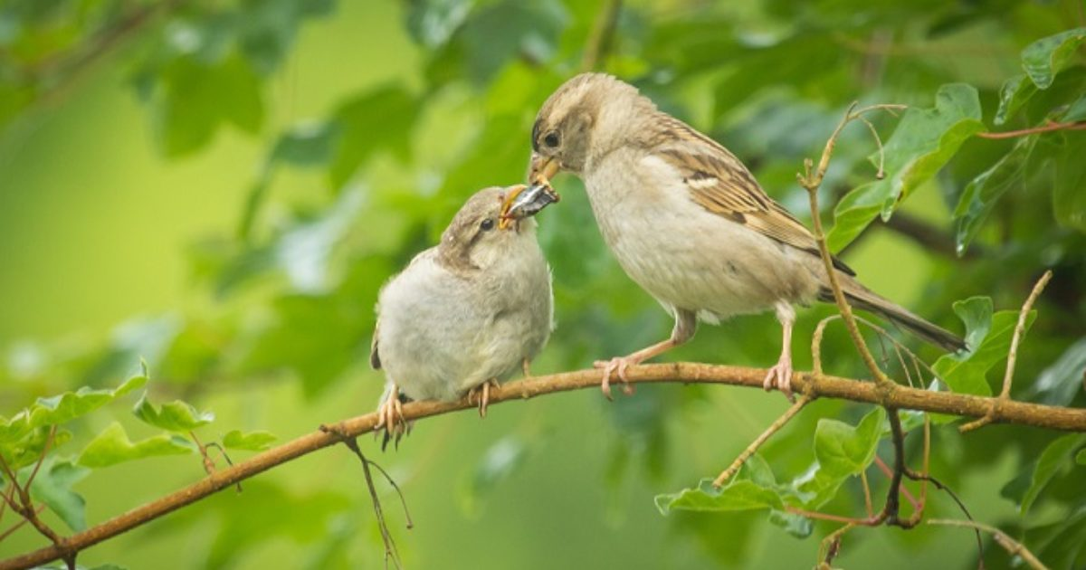 Summer Bird Feeding Tips