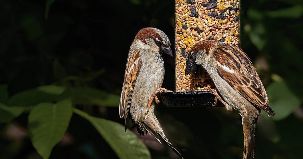 How to Keep Bird Seed Fresh