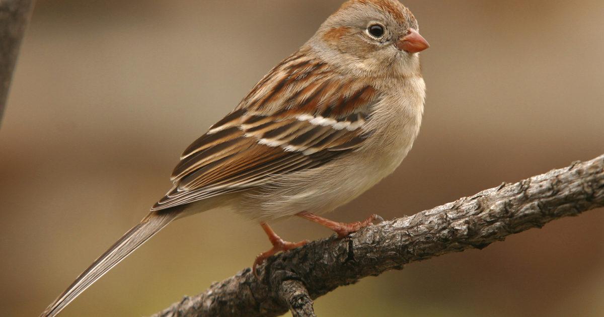 Check Out Alberta Birds Facebook Group