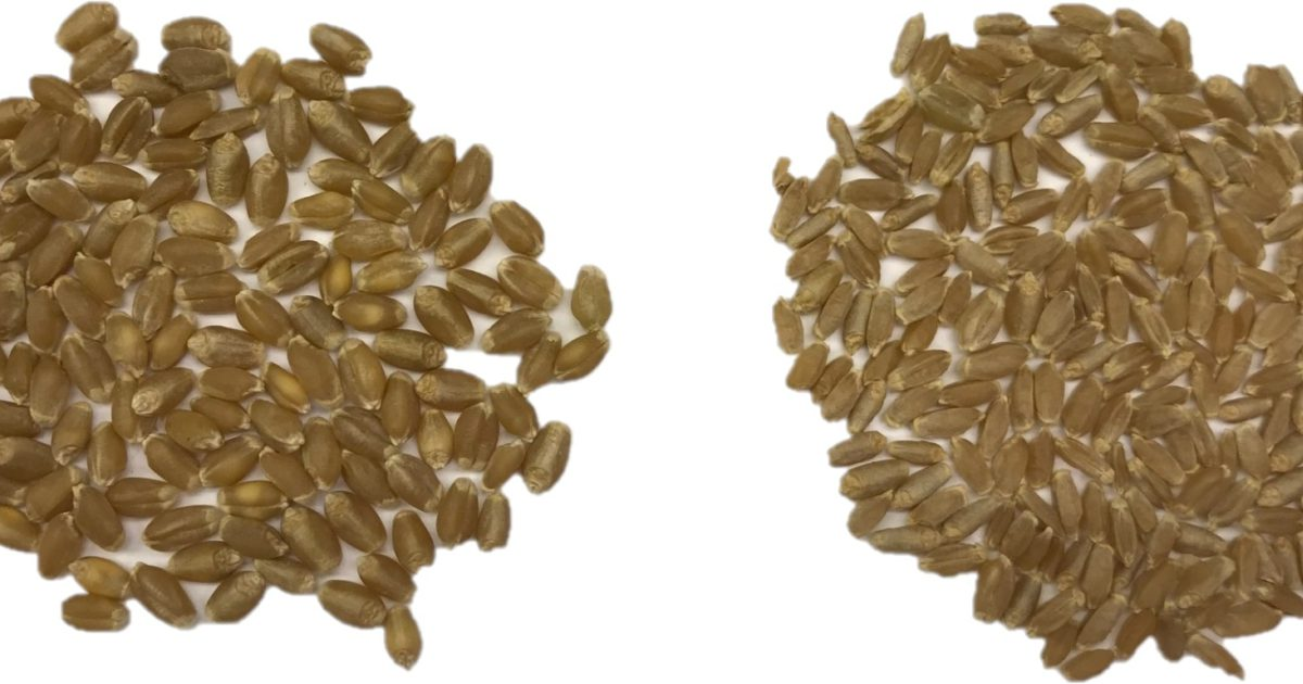 Why small seed is an economical choice.