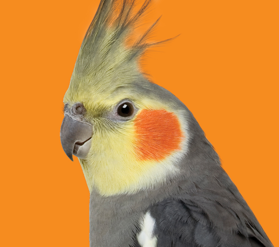 Mother Nature's® Cockatiel Premium