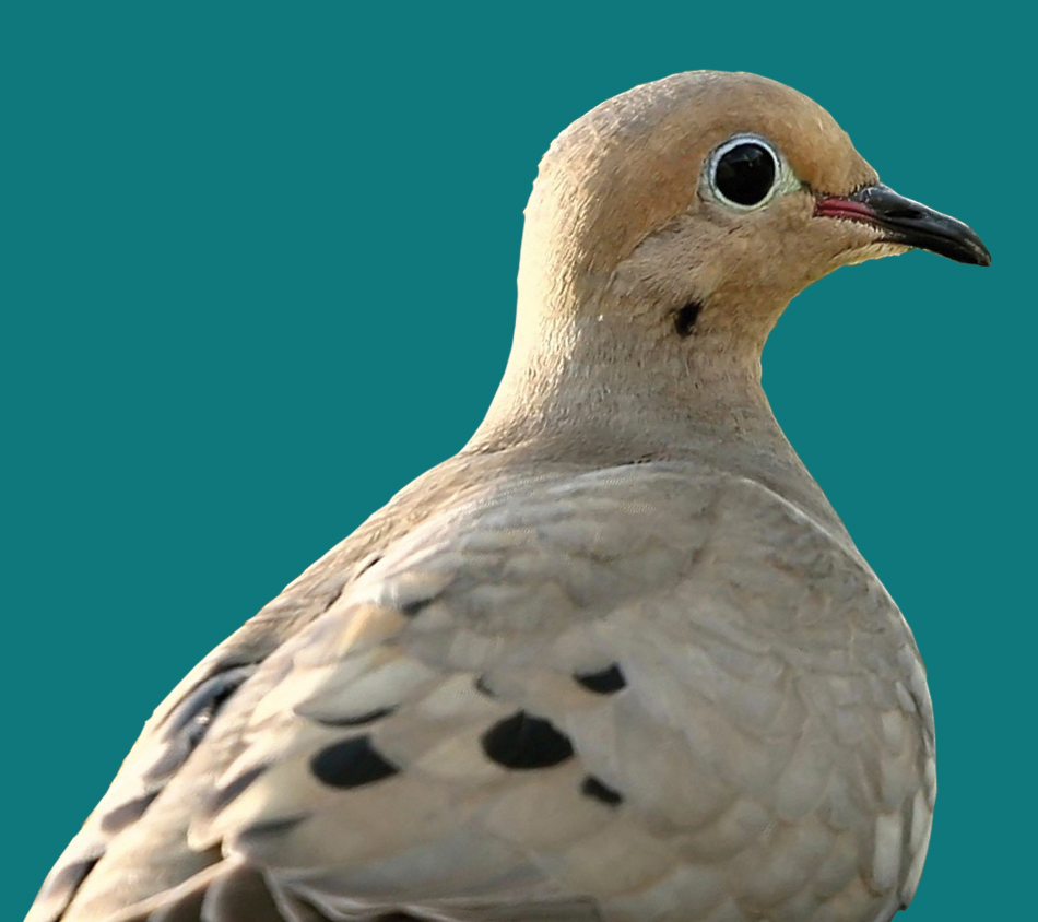 Mother Nature's® Dove Premium