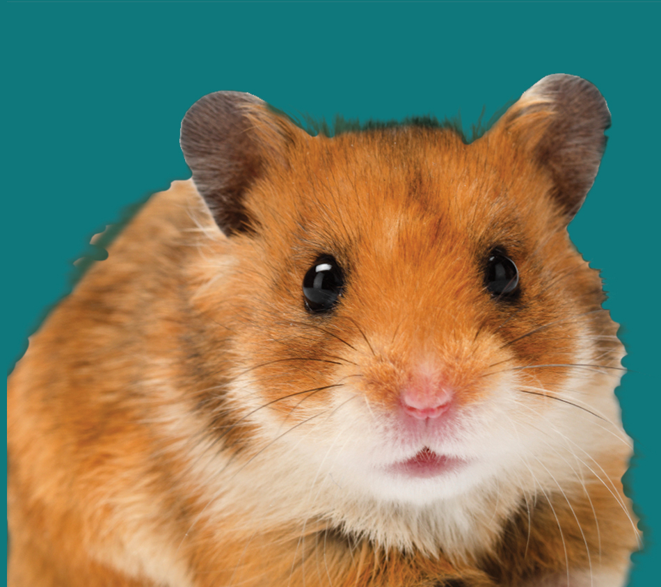 Bird's Choice® Hamster Premium