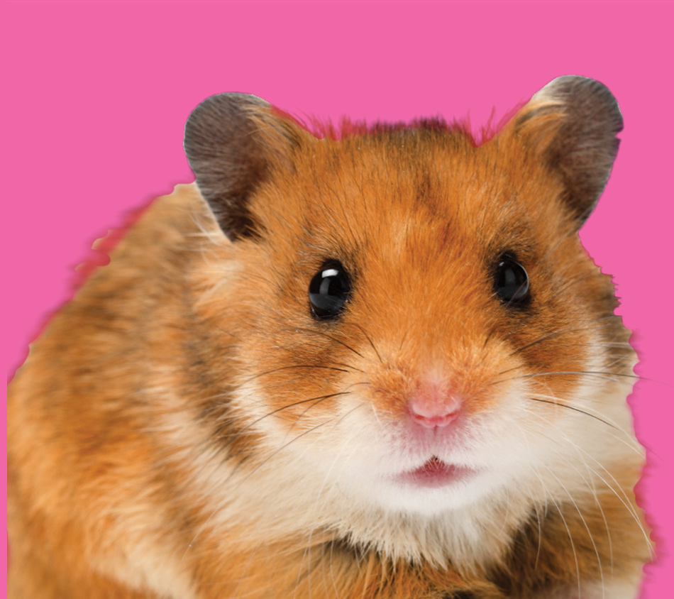 Bird's Choice® Hamster Gerbil