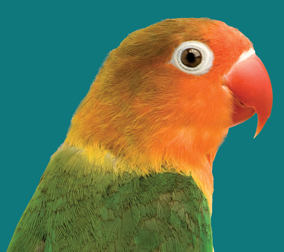 Bird's Choice® Lovebird Premium