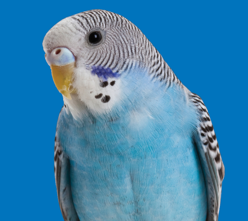 Bird's Choice Budgie Premium