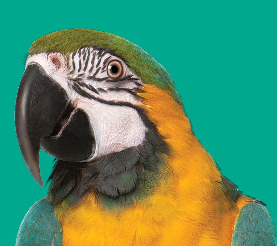 Bird's Choice® Parrot Premium