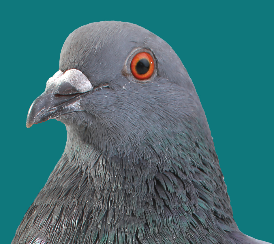 Mother Nature's® Pigeon Premium